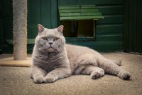 Cleracres Bristol cattery