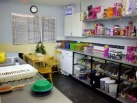 Cleracres cattery Bristol
