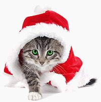 Christmas boarding cattery
